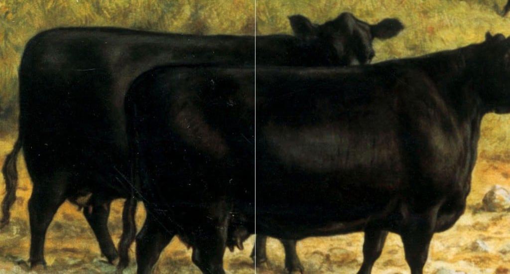 cow-comparison